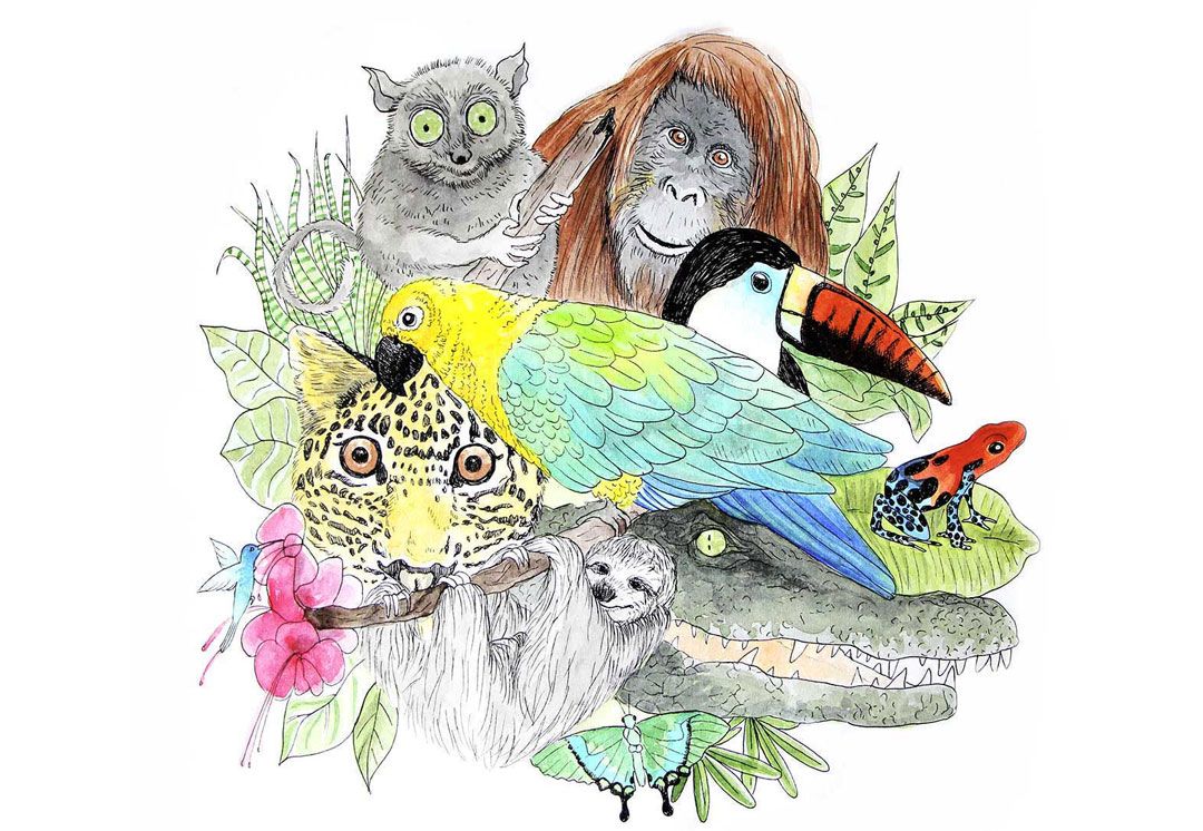 dessin animaux tropicaux